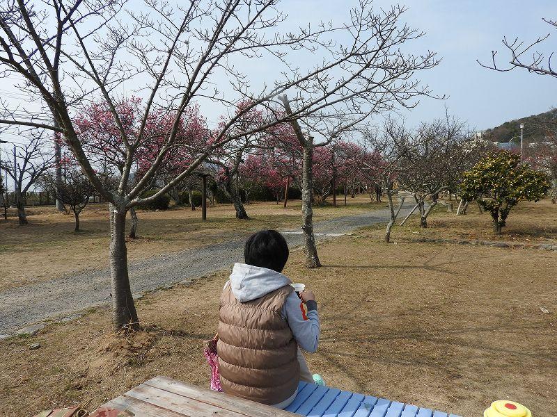 梅津寺公園